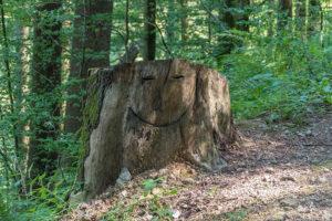 Der lächelnde Baumstumpf