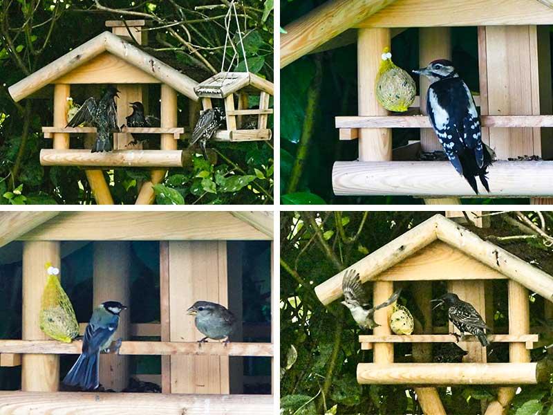 Die Stars am Vogelhaus